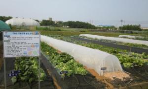 직접 키운 텃밭 채소 안전하게 먹는 재배방법